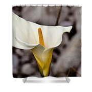 Rock Calla Lily Shower Curtain