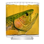 Rock Creek Rainbow Shower Curtain by Lauren Leigh Hunter Fine Art Photography