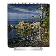 Rock Formations And Trees On The Shoreline In Acadia National Park Shower Curtain