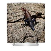 Rock Island Lizard   #8103 Shower Curtain