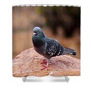 Rock Pigeon 030515 A Shower Curtain