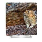 Rock Rabbit Shower Curtain