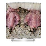Rockhopper Penguin Feet Shower Curtain