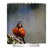 Rockin Robin Shower Curtain