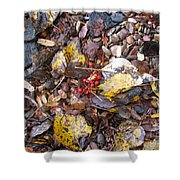 Rocks And Berries Shower Curtain