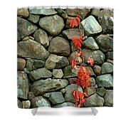 Rocks And Ivy Shower Curtain
