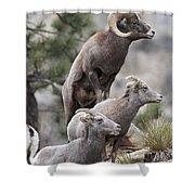 Rocky Mountain Big Horns Shower Curtain