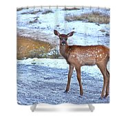 Rocky Mountain Elk Calf Shower Curtain