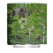 Rocky Mountain Elk Herd Shower Curtain
