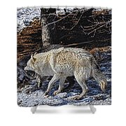 Rocky Mountain Encounter Shower Curtain by Skye Ryan-Evans