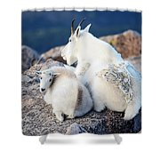 Rocky Mountain Goat Shower Curtain