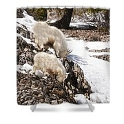 Rocky Mountain Goats - Mother And Baby Shower Curtain