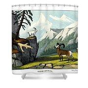 Rocky Mountain Sheep Shower Curtain