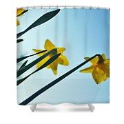 Rodchenko's Daffodils Shower Curtain