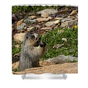 Rodent In The Rockies Shower Curtain