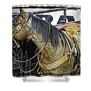 Rodeo Horse Two Shower Curtain