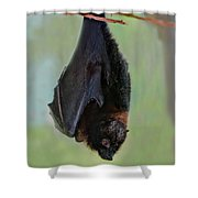 Rodrigues Flying Fox Shower Curtain