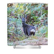 Roe Buck In Woodland Shower Curtain