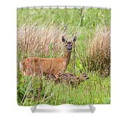 Roe Deer Capreolus Capreolus With Two Fawns Shower Curtain