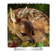 Roe Deer Fawn Shower Curtain