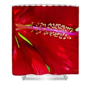Rolling Hills 5 Shower Curtain