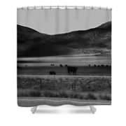 Rolling Hills And Cattle In Black And White Shower Curtain