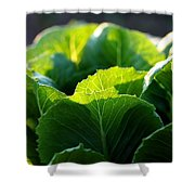 Romaine Study Shower Curtain by Angela Rath
