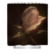 Romance Of A Rose Shower Curtain