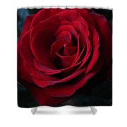 Romancing The Rose  Shower Curtain