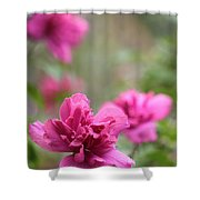 Romantically Pink Shower Curtain