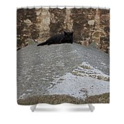 Rome Cat Shower Curtain