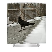 Roof Crow Shower Curtain