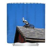Roof Top Bird Shower Curtain