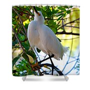 Rookery 11 Shower Curtain