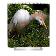 Rookery 21 Shower Curtain