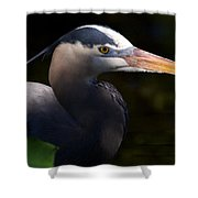 Rookery 3 Shower Curtain