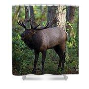 Roosevelt Elk Bugling Shower Curtain