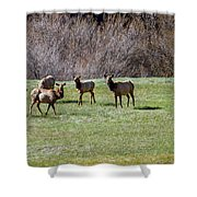 Roosevelt Elk Shower Curtain