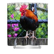Roost Ruler Shower Curtain