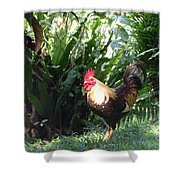 Rooster 1 Shower Curtain