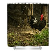 Rooster In The Hen House Shower Curtain