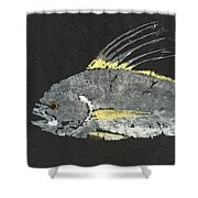 Gyotaku Roosterfish Shower Curtain