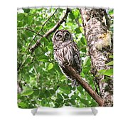 Roosting Owl Shower Curtain