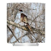 Roosting Rooster Shower Curtain