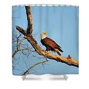 Roosting Tree 1 Shower Curtain