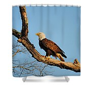 Roosting Tree 2 Shower Curtain