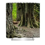 Root Feet Collection 1 Shower Curtain