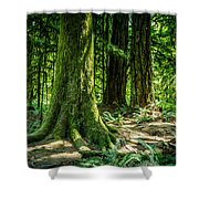 Root Feet Collection 3 Shower Curtain