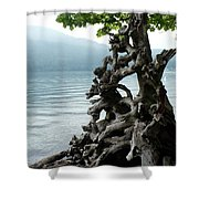 Root Of Beauty Shower Curtain