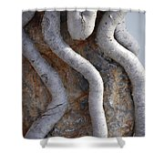 Root Route By Jammer Shower Curtain